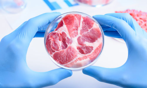 Whole meat sample in laboratory Petri dish. Cultured lab grown meat or meat examination concept.